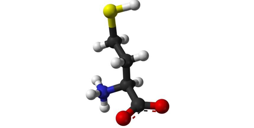 homocystein
